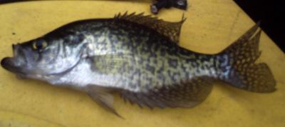Small Fish 2