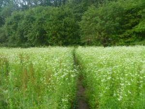 Field, West Branch Delaware River