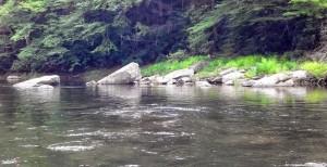 Neversink River, flyfishing, catskills fishing, dry fly fishing, #finfollower