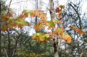 Fall leaves, October 2014, finfollower