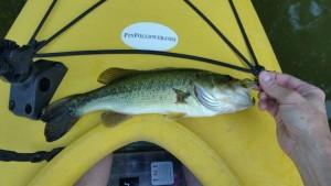 Kayak fishing, pond fishing, popper, bass, bass on a fly, spring fishing, kayak fly fishing, Finfollower, morning fishing, booglebug