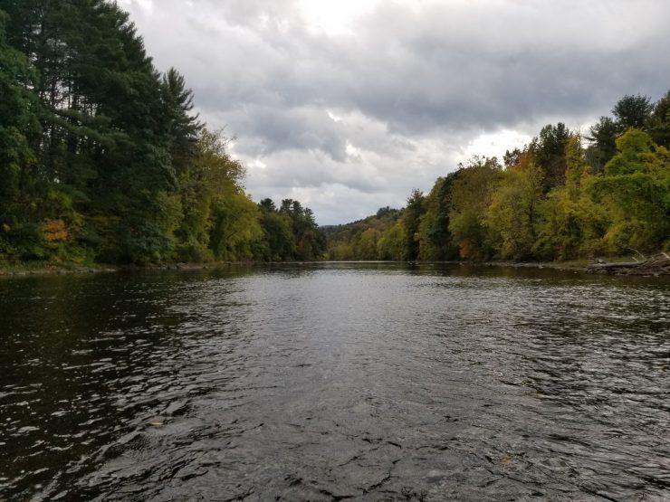 Housatonic River, Fly Fishing, streamer fishing, fall fishing, FinFollower, brown trout, rainbow trout
