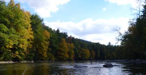 Housatonic River, fall fly fishing, fall fishing, wild brown trout, dry fly finfollower, river fishing, brown trout, wild trout, fishing with flies,Connecticut fly fishing, dry flies, small flies, fly tying, fly fishing sites, fly fishing stuff, fly fishing product, river fly fishing, fly fishing tools, fly fishing gear, nymphing, rainbow trout