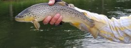 Delaware River, drift boat, dry fly, fly fishing, finfollower, brown trout, Cross Current Guides