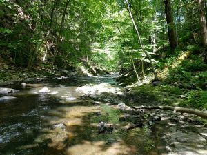 small stream, panfish on the fly, bass on the fly, trout on the fly, streamer fishing, finfollower